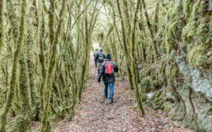 randonnée de Constant-sentier-arbre-mousse