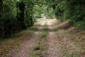 salgues sentier sous bois