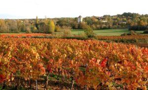 Cambayrac les vignes en automne